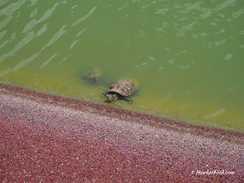 punggol settlement tortoise